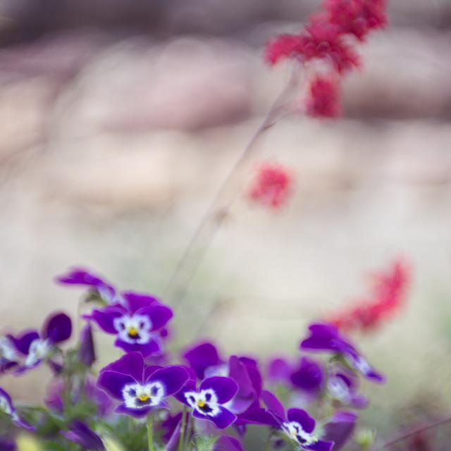 """Dreamflowers"" stock image"