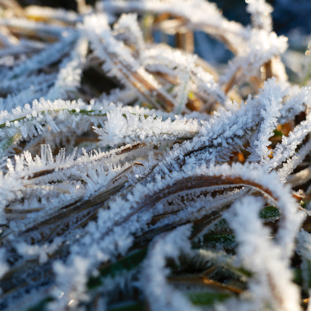 """Winter Frosty Grass Pattern"" stock image"