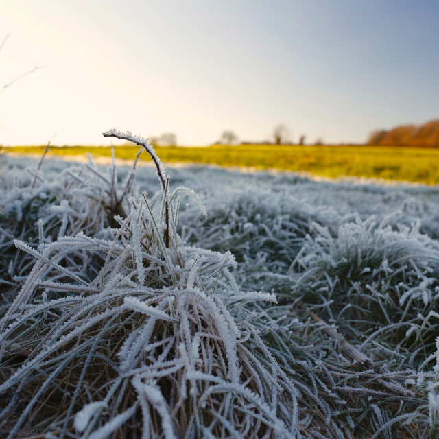 """Winter Frosty Grass Landscape with Blue Sky"" stock image"