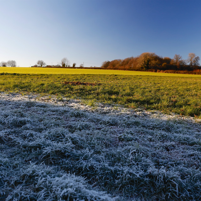 """Winter Frosty Grass Landscape with Vibrant Blue Sky"" stock image"