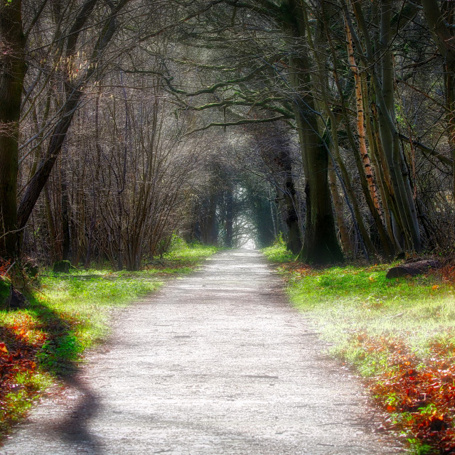 """""""Fairytale Forest"""" stock image"""