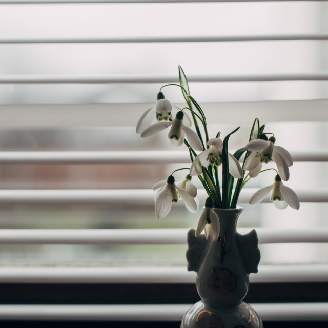 """""""Spring in the window"""" stock image"""