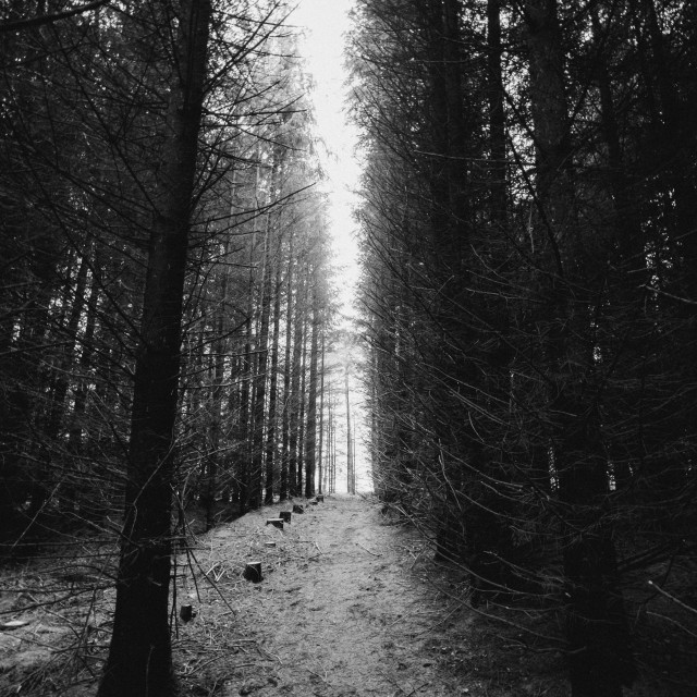 """Black and white trees"" stock image"