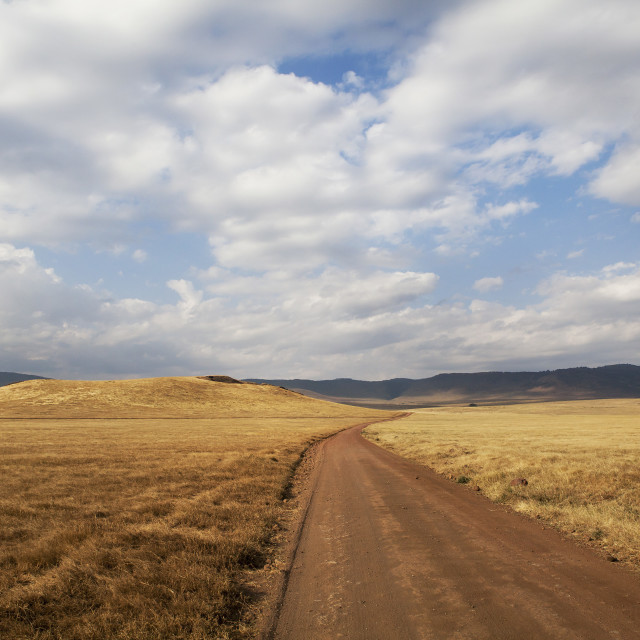 """Serengeti plains"" stock image"