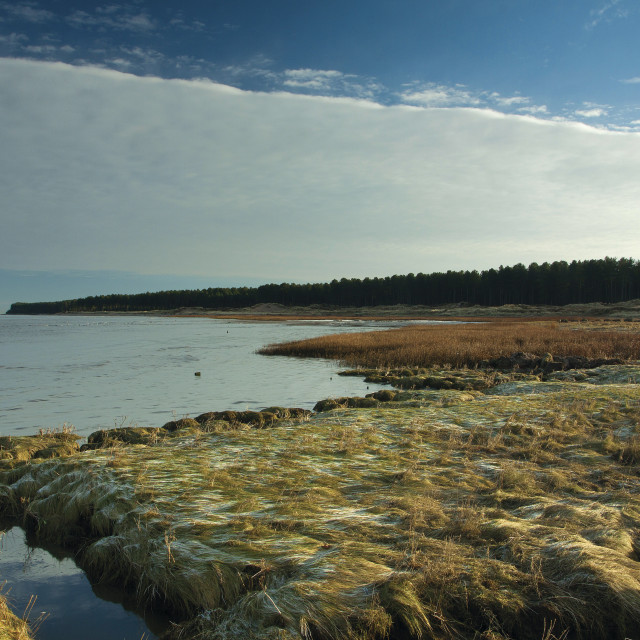 """""""Tentsmuir Nature Reserve"""" stock image"""