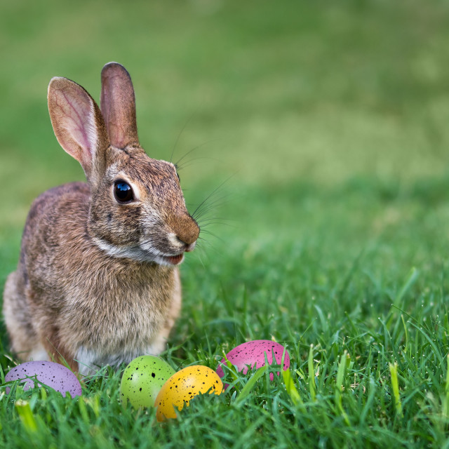 """Bunny and Easter eggs in the grass"" stock image"