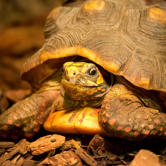 """""""Turtle in the wild"""" stock image"""