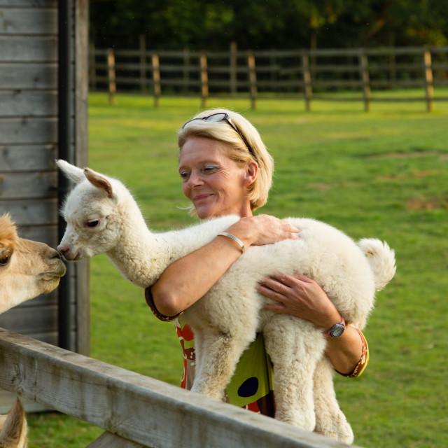 """baby alpaca kiss"" stock image"