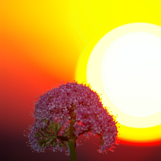 """""""Valerian and the sun"""" stock image"""