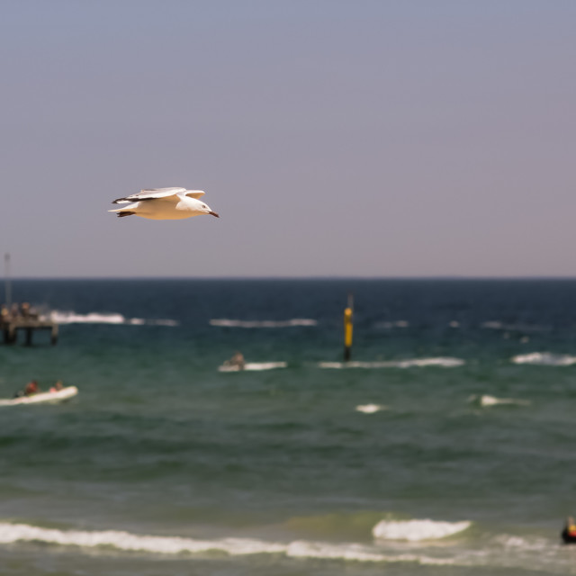 """Hanging gull"" stock image"