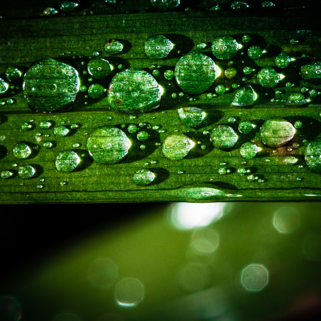 """rain drops"" stock image"