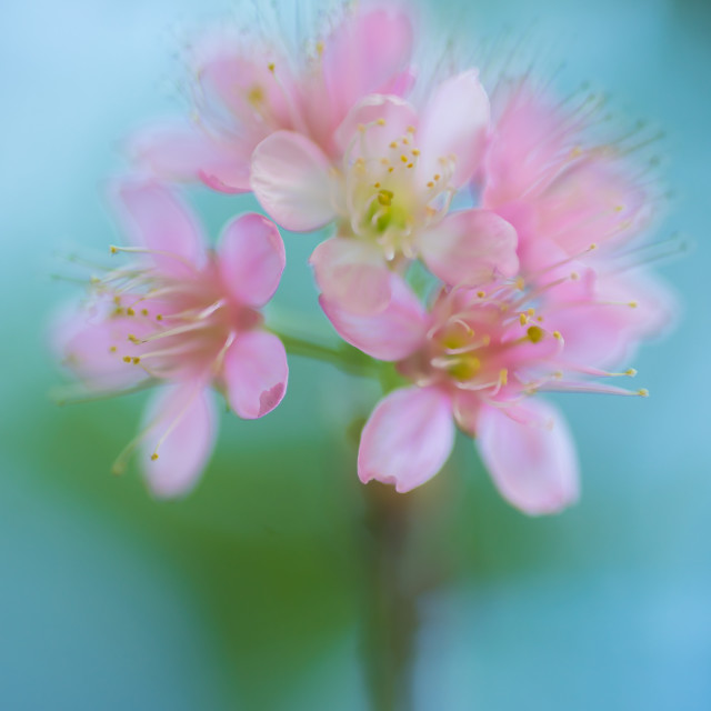 """""""Spring Background. Nature Background. Flowers abstract background"""" stock image"""