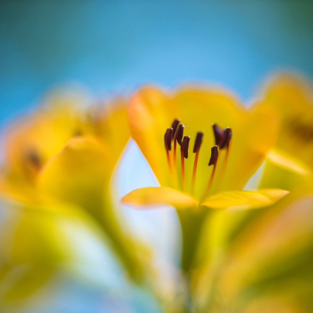 """""""Spring Background. Nature Background. Yellow Flowers abstract background"""" stock image"""