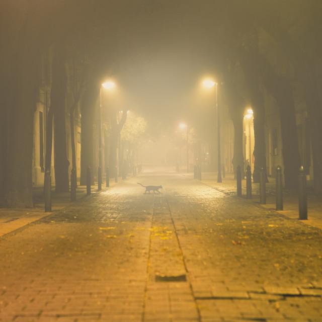 """Urban street at night"" stock image"