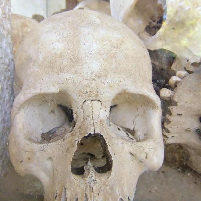 """skull of victim"" stock image"