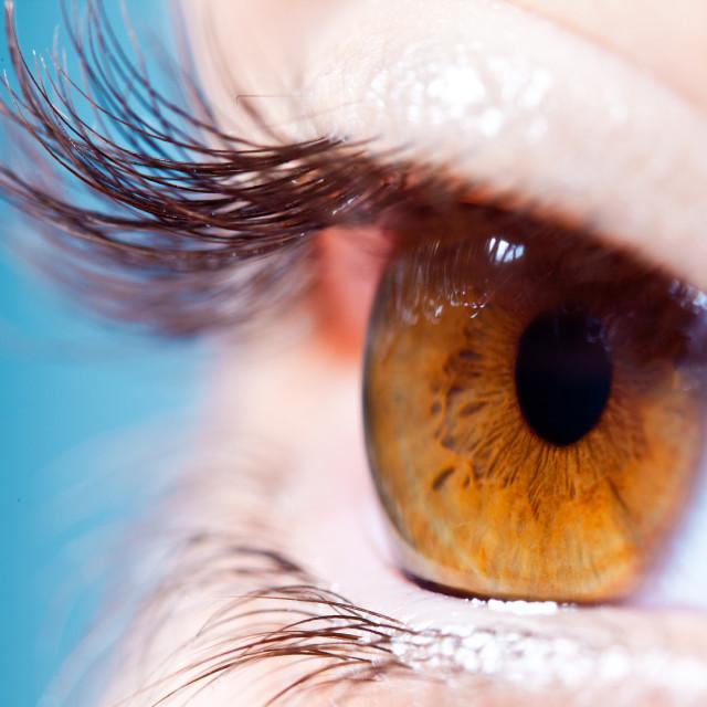 """""""Human eyelashes close up."""" stock image"""