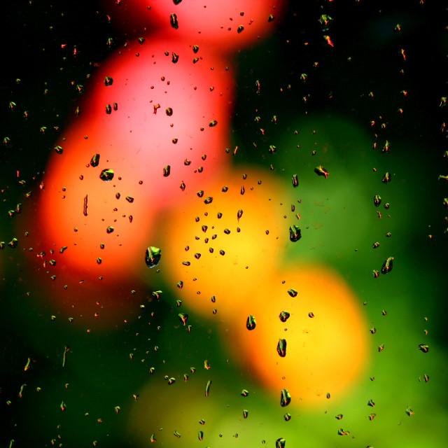 """""""My garden in rain"""" stock image"""