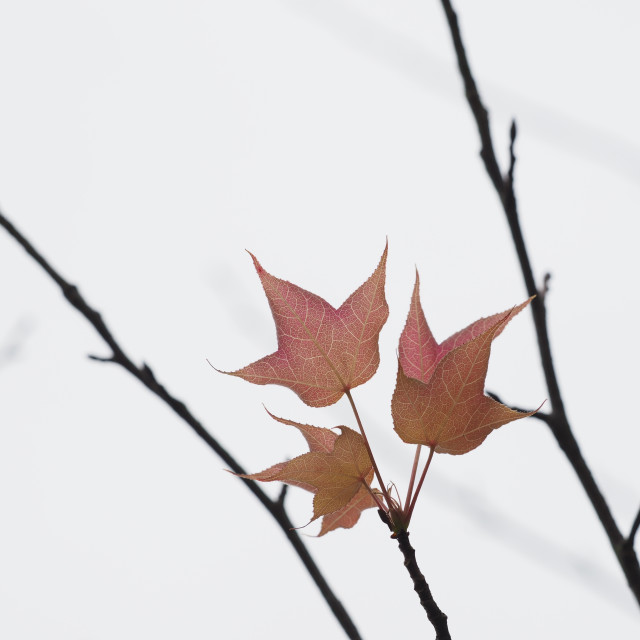 """leaf"" stock image"