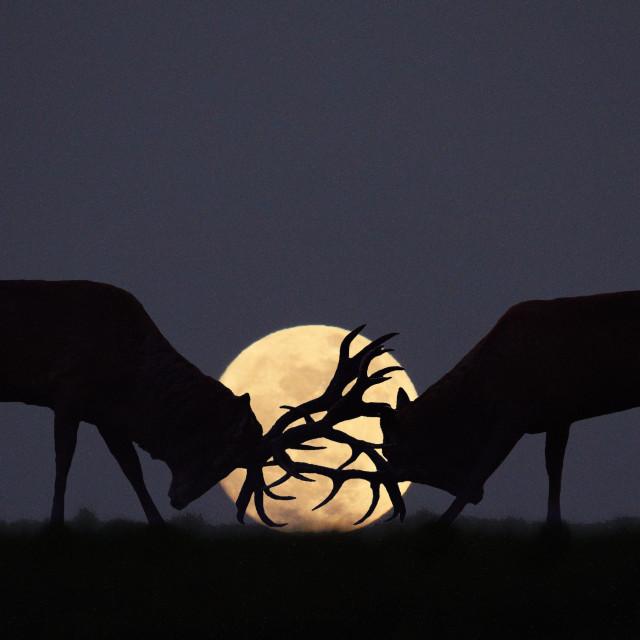 """Moonlight Rut"" stock image"