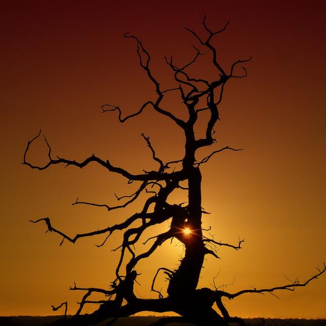 """Sunset tree"" stock image"