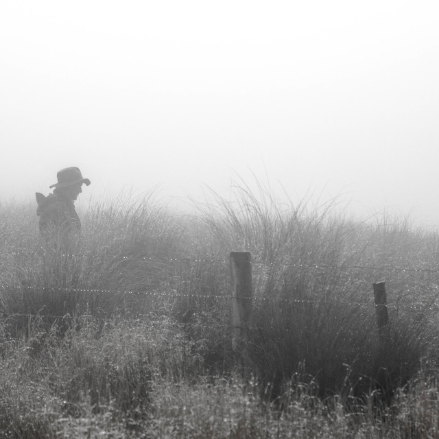 """Shepherd in the fog"" stock image"