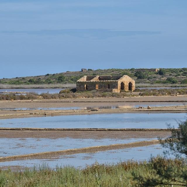 """the park where flamingos nest in Sicily"" stock image"