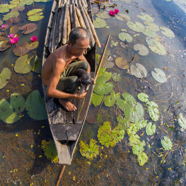 """a men with litte dog in a boat, lotus pond countryside Vietnam"" stock image"