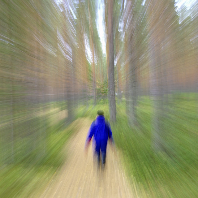"""Wonderful Pine Forest"" stock image"