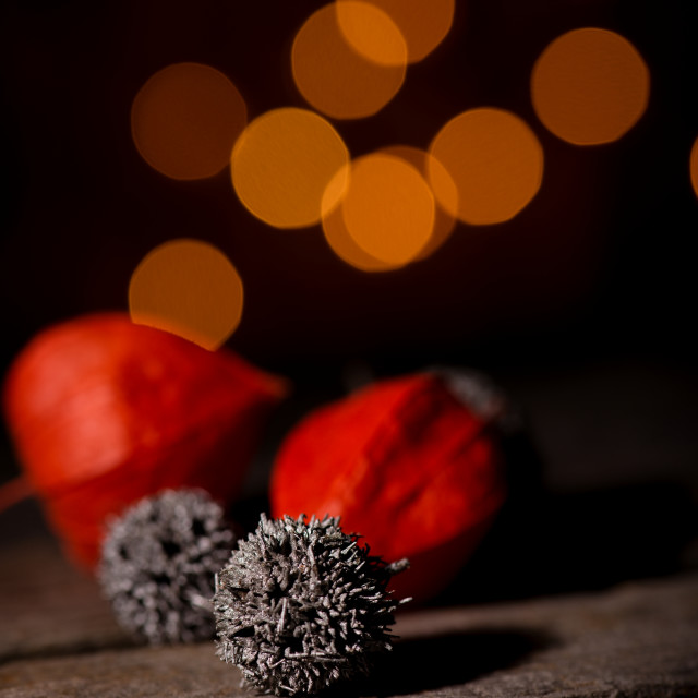 """""""Grey prickly ball with physalis blooms"""" stock image"""