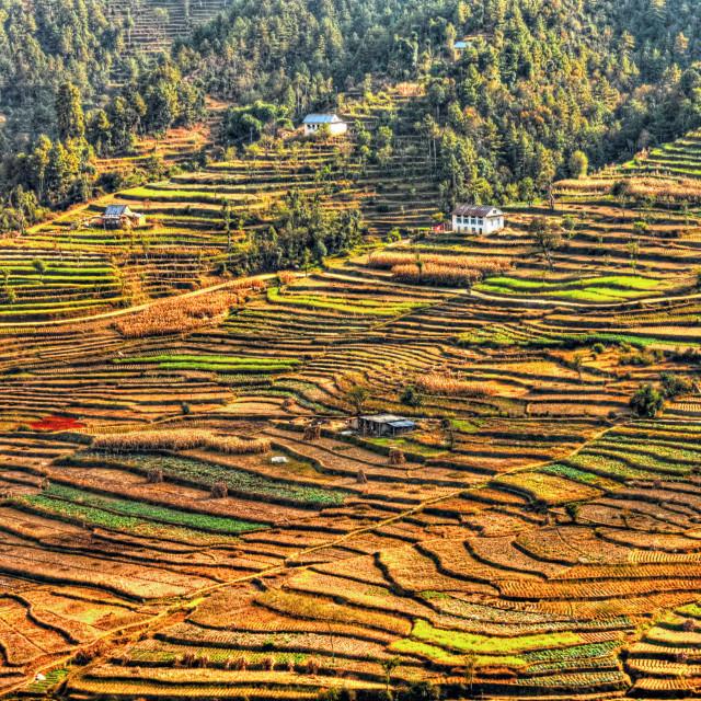 """Farmland Terraces"" stock image"
