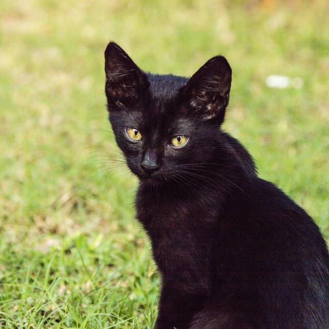 """Kitten Cat"" stock image"