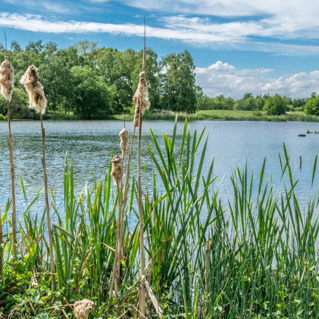 """""""A Lake in the Cheshire countryside"""" stock image"""