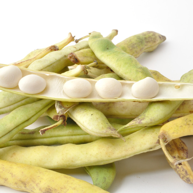"""""""Paimpol coco beans"""" stock image"""