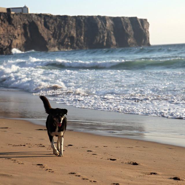"""Dog on the beach"" stock image"