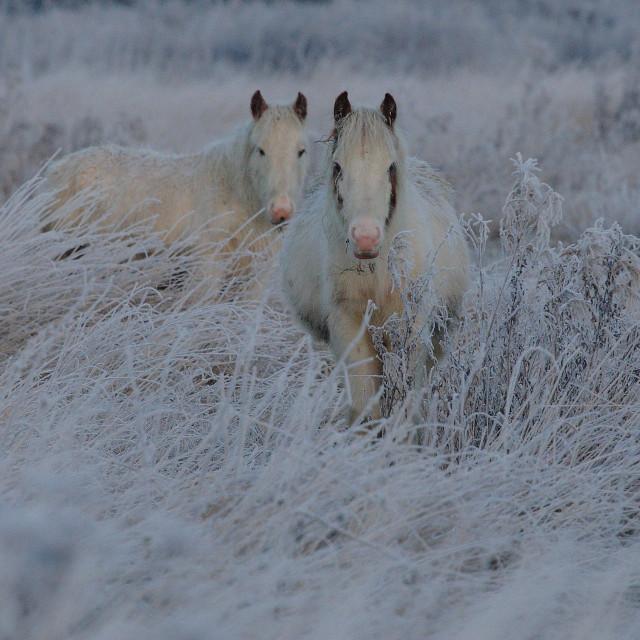 """""""White horses"""" stock image"""