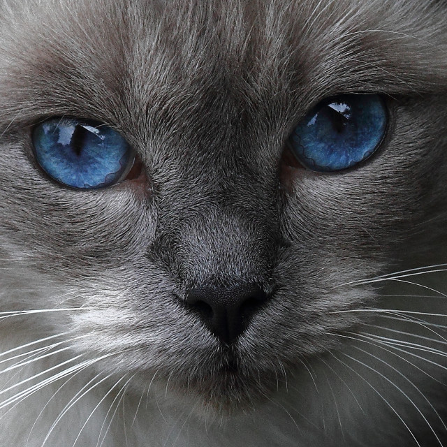 """Blue eyes"" stock image"
