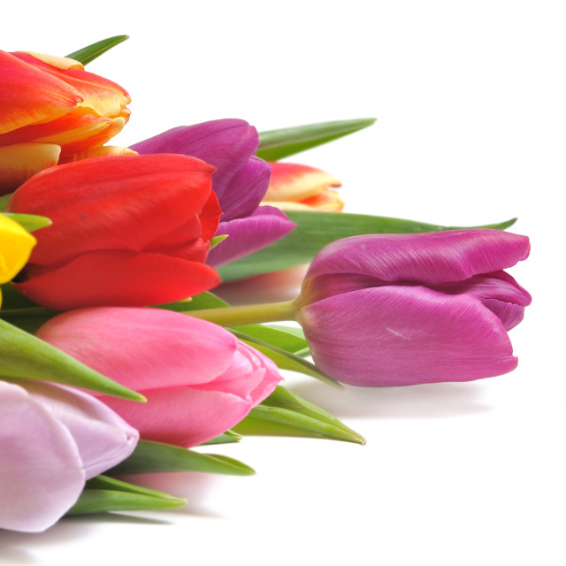 """colorful tulips bouquet"" stock image"