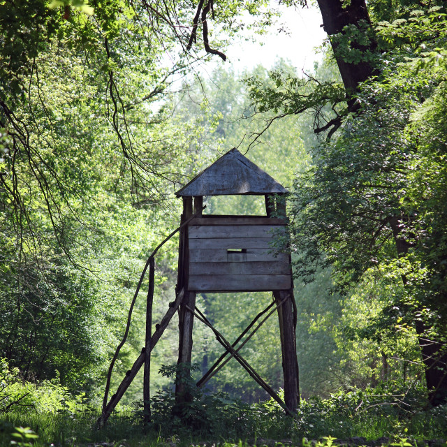 """""""wooden hunter tower in forest"""" stock image"""
