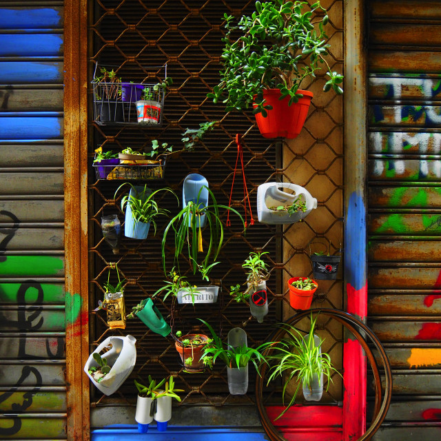 """""""Natura viva"""" stock image"""