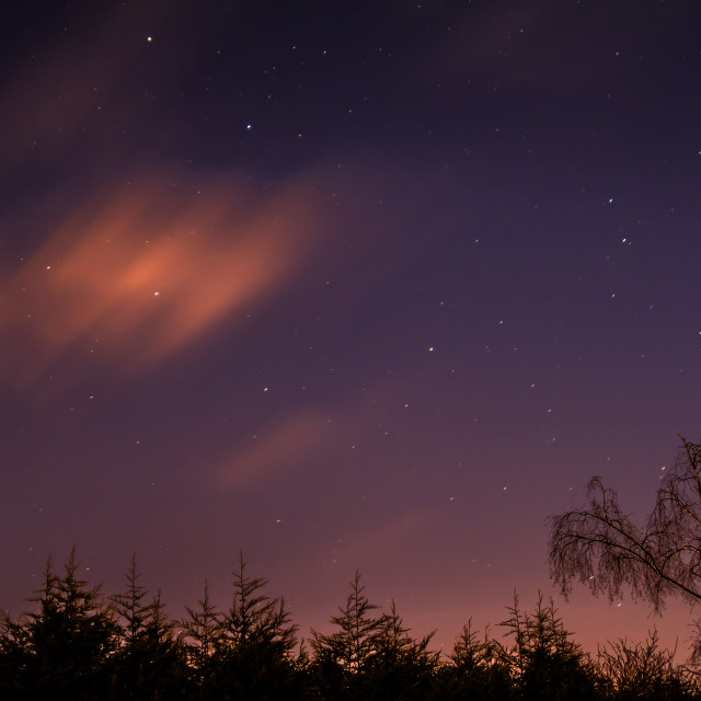 """""""Treetops, Stars and CLouds"""" stock image"""