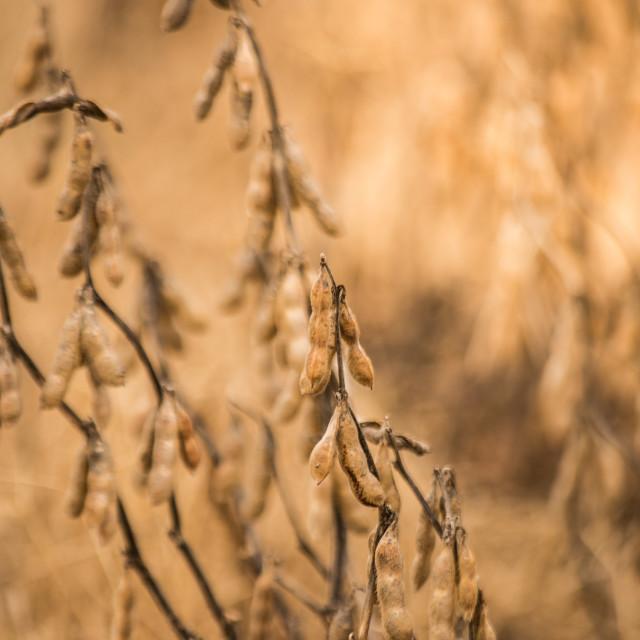 """""""Forgotten harvest"""" stock image"""