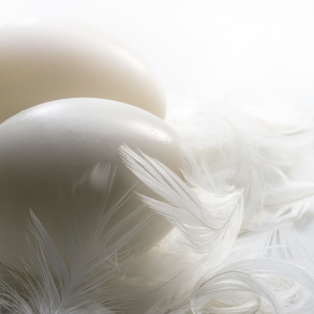"""Duck Eggs and Feathers"" stock image"