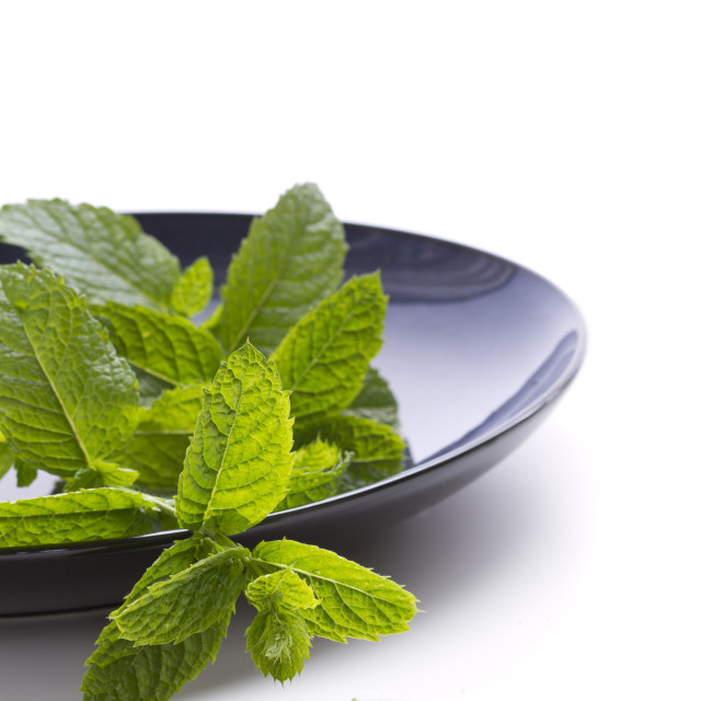 """Bunch of mint leaves leaves on blue plate on white background"" stock image"