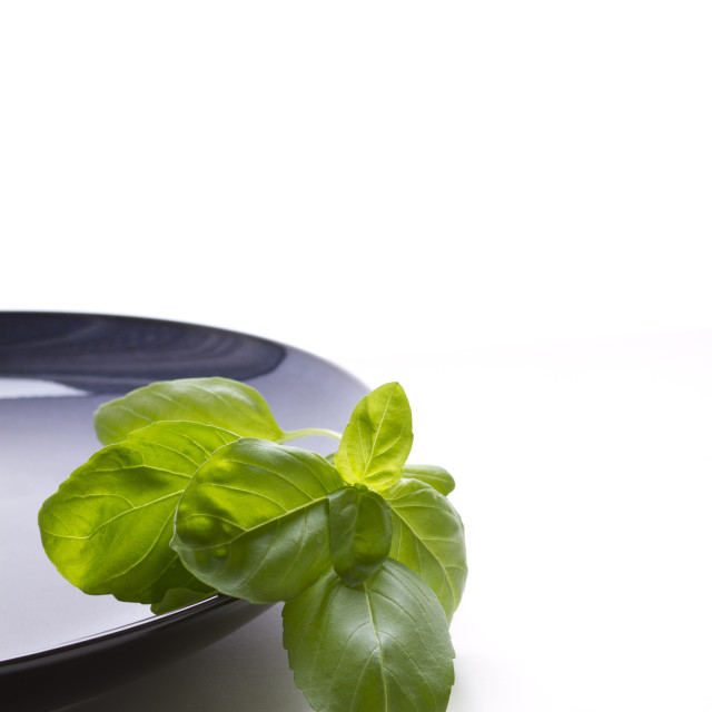 """Basil leaves on a blue plate with a white background"" stock image"