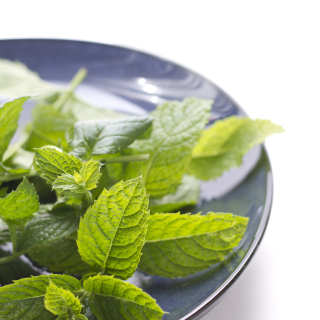 """Bunch of mint leaves on blue plate on white background"" stock image"