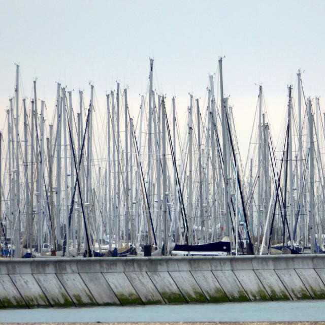 """Marina masts, La Rochelle"" stock image"