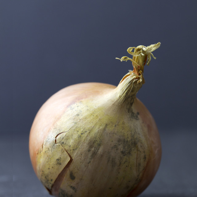 """""""White onion isolated on a dark background"""" stock image"""