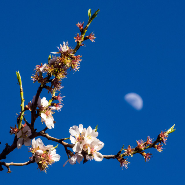 """flowers and moon"" stock image"