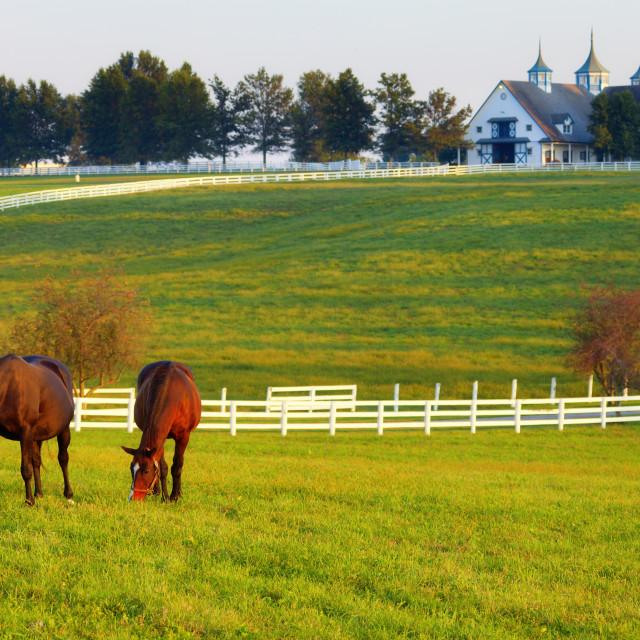 Craigslist farm and garden horses