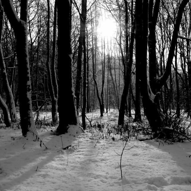 """Snowy Woodland"" stock image"